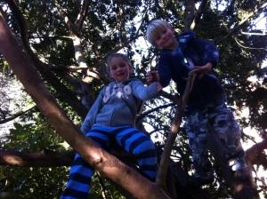 Tree climbing at Clare's