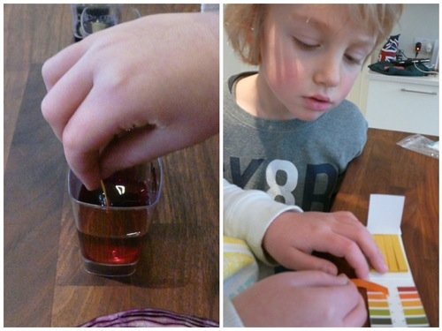 red cabbage acid base homeschool science