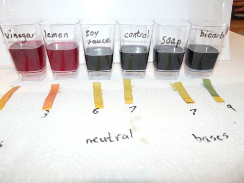 red cabbage and litmus acid base indicator - homeschool science