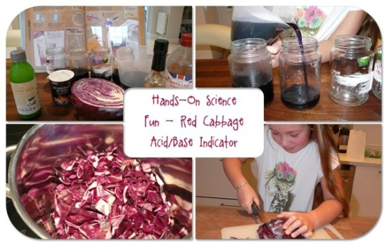 Red cabbage acid base indicato original